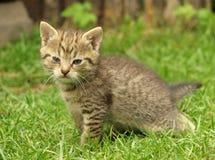 Kätzchen im Gras Lizenzfreie Stockbilder