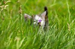Kätzchen im Gras Lizenzfreies Stockbild