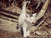 Kätzchen im industriellen Settting u. in x28; color& x29; Stockfotografie