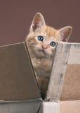 Kätzchen im Kasten stockfoto