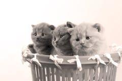 Kätzchen im kleinen Korb, Großaufnahme lizenzfreie stockfotografie