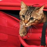 Kätzchen im Koffer stockfoto