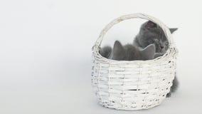 Kätzchen im Korb stock video