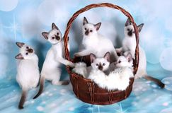 Kätzchen im Korb Stockfotos