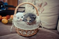 2 Kätzchen im Korb stockbild