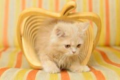 Kätzchen im Korb Stockfotografie