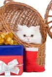 Kätzchen im Rattanträger Lizenzfreies Stockbild