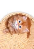 Kätzchen im Strohkorb Stockbilder