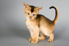 Kätzchen im Studio Lizenzfreie Stockfotos