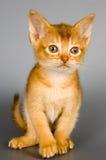 Kätzchen im Studio Lizenzfreie Stockbilder