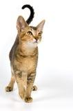Kätzchen im Studio Stockbild
