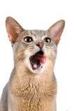 Kätzchen im Studio Stockfoto