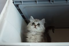 Kätzchen im Transportkasten Lizenzfreies Stockbild