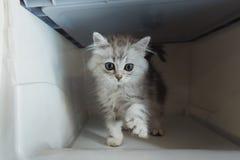 Kätzchen im Transportkasten Stockfotos