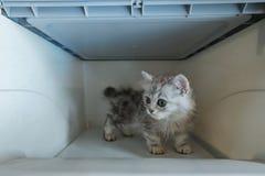 Kätzchen im Transportkasten lizenzfreie stockfotos