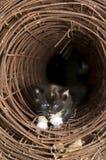 Kätzchen im Tunnel Stockbilder