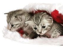 Kätzchen im Weihnachtshut Lizenzfreie Stockfotos