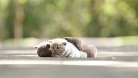 Kätzchen im Yard stock footage