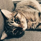 Kätzchen, junges katzenartiges, Tiger Cat Lizenzfreies Stockfoto