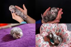 Kätzchen, Katzen und Kissen, multicam, Gitter 2x2 Lizenzfreie Stockbilder