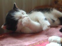 Kätzchen leckt Tatze Stockfoto