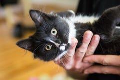 Kätzchen in Mann ` s Händen Lizenzfreies Stockfoto