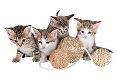 Kätzchen mit Bällen Lizenzfreie Stockfotos