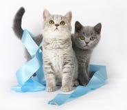 Kätzchen mit blauem Farbband stockfotografie