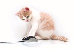 Kätzchen mit der Computermaus Lizenzfreies Stockbild