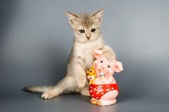 Kätzchen mit einer Münzkassette Stockfotos