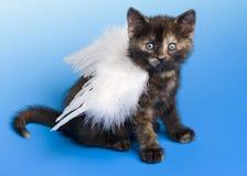 Kätzchen mit Flügel des weißen Engels Stockfotografie