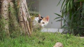 Kätzchen mit gelbem und schwarzem Pelz steht auf Gras und schaut neugierig aus Baum heraus stock video footage