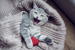 Kätzchen mit Herzen herein am Valentinstag Lizenzfreies Stockfoto