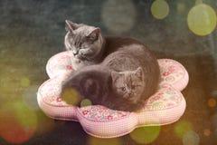 Kätzchen mit ihrer Mutter auf einem Kissen Lizenzfreie Stockfotos