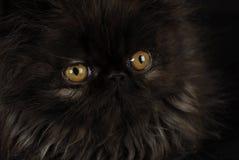 Kätzchen mit intensiven Augen Stockbild