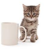 Kätzchen mit Kaffeetasse Stockfotos