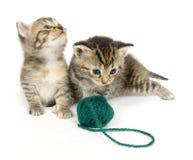 Kätzchen mit Kugel des Garns auf weißem Hintergrund stockfotos