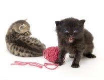 Kätzchen mit roter Kugel des Garns auf weißem Hintergrund stockbild