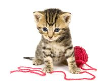 Kätzchen mit roter Kugel des Garns auf weißem Hintergrund Stockfotografie