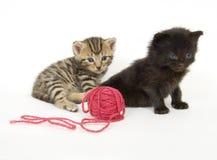 Kätzchen mit roter Kugel des Garns auf weißem Hintergrund stockfotos