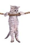 Kätzchen mit Seil stockbilder