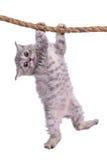 Kätzchen mit Seil Lizenzfreie Stockbilder