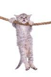 Kätzchen mit Seil Lizenzfreie Stockfotos