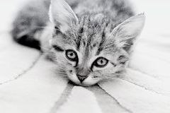 Kätzchen mit traurigen Augen Stockfotografie