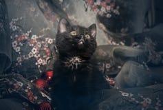 Kätzchen mit Weihnachtsbällen und -flitter Lizenzfreie Stockfotografie