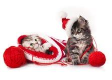 Kätzchen mit Weihnachtsdekorationen stockfoto