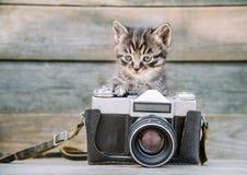 Kätzchen mit Weinlesefotokamera Stockfotos