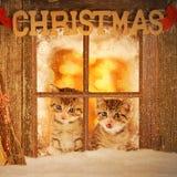 Kätzchen mit zwei Jungen, das neugierig aus einem Fenster heraus schaut Lizenzfreies Stockfoto