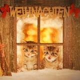 Kätzchen mit zwei Jungen, das neugierig aus einem Fenster heraus schaut Lizenzfreie Stockfotografie