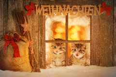 Kätzchen mit zwei Jungen, das neugierig aus einem Fenster heraus schaut Stockbilder